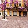 glicine di rara bellezza a Pescara