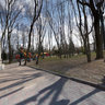 In Tolstoy's park