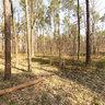Forest (Warszawa- Wesoła)