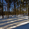 Boyd Conservation Area - Winter Hike - Deep Forest