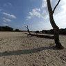 Sandy field on the Veluwe