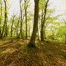 Beech forest near San Martino al Cimino, Italy