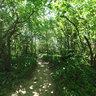 Groß Zicker Wald 2