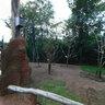 Wellensittiche - Vogelpark Marlow