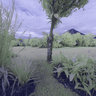 Arenal Springs, La Fortuna, Costa Rica - INFRARED