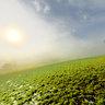 Nebel Sonnenaufgang Friedenslinde Bronnweiler 1487