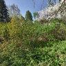Belarus, Minsk, Botanical garden