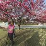 Praçinha das Cerejeiras