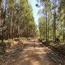 Estrada em meio aos eucalíptos