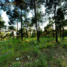 Panorama of the forest near the Thessaloniki, Greece