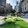 Park Avenue Sheep Herd