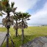 Pyoseon Beach 1