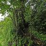 UGA Monteverde Costa Rica Campus - Camino Real Trail