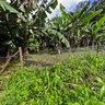 UGA Monteverde Costa Rica Campus - Student Farm
