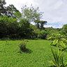 UGA Monteverde Costa Rica Campus - Medicinal Plants Garden