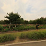 长春公园----鲜花美女11,Changchun park,