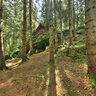Thr rocky Waldnaabtal
