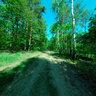 Młociny forest