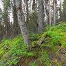 Rawson Trail