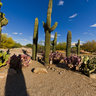 Cactus Garden Gilbert Riparian Preserve at Water Ranch, Gilbert, Arizona USA
