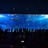 Churaumi Aquarium :: Okinawa in Japan