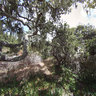 Fort Ord Oak Forest