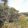 Fort Ord Oak Forest II