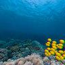 Underwater3d