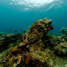 Shallow coastal reef diving in Manado