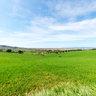 Panorama - Azienda Falconi -