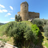 Scarlino-Castle and olive grove