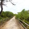 Roccamare-pineta-