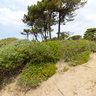 Roccamare beach