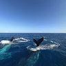 Whales New Caledonia