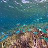 Coral Reef Fish Symbiosis
