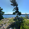 Three Tree Island on Bear Lake in Killarney Provincial Park
