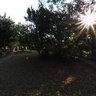 Emdoneni garden