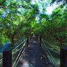 Mangrove forest - Chonburi, Thailand