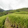 Terraced fields in La Pan Tan village, Mu Cang Chai