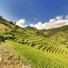 Terraced fields in Che Cu Nha village