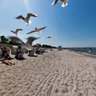 Feeding Seagulls in Zingst, Germnay