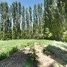 A Garden in Zoeram