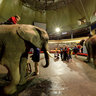 Elephant riding at Riga Circus, Latvia