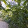 Botanic garden inside
