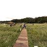 Field of buckwheat, Bongpyeong