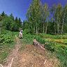 forest pond (elk island)